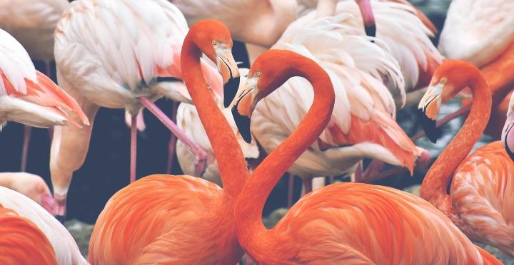 flamingo-3526365_1920