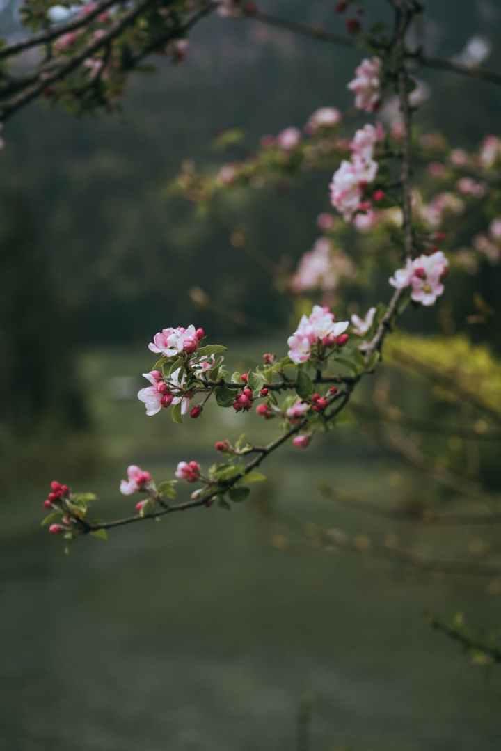 Fengshui ja piha